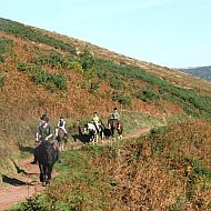 Pony Trekking in Exmoor