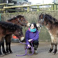 Exmoor Pony Center